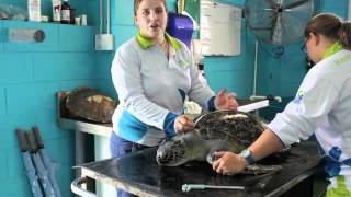 Turtle Hospital Generic Thumbnail