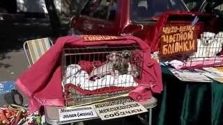 Одесса. Староконный рынок - 2. Продажа собак. Осень 2014.