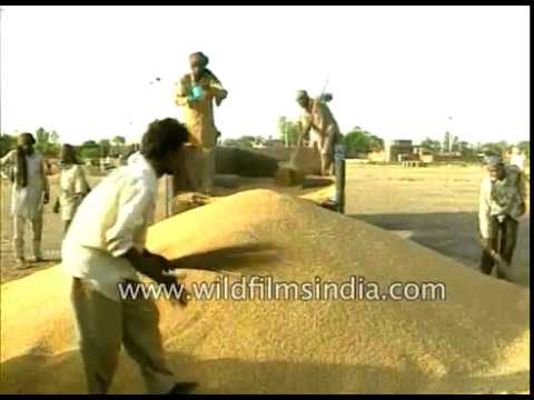 Iraq returns Indian wheat for poor quality