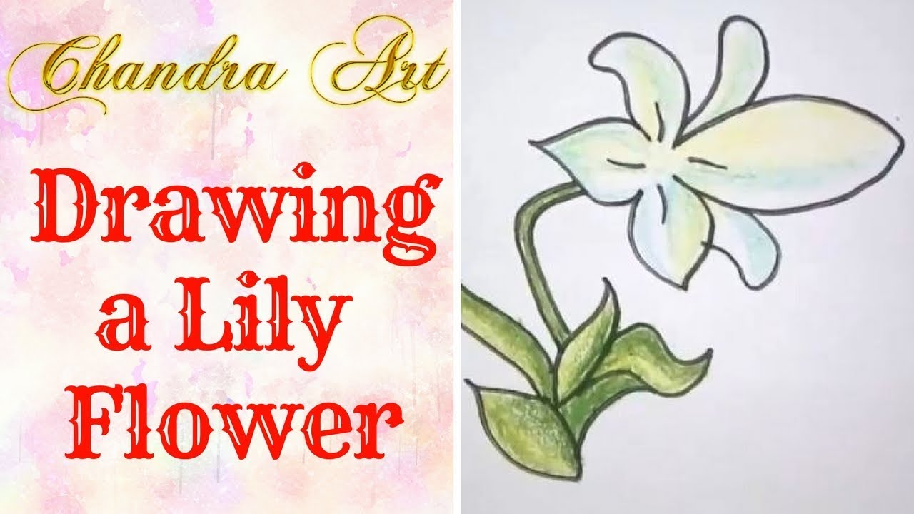 Drawing A Lily Flower How To Draw Lily Flower Step By Step How
