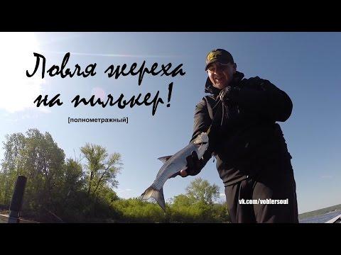 браконьерская ловля толстолоба