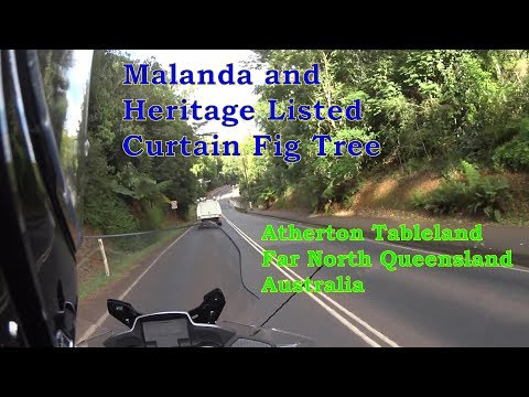 Malanda - Historic Dairy Country of Far North Queensland and Heritage Listed Curtain Fig Tree