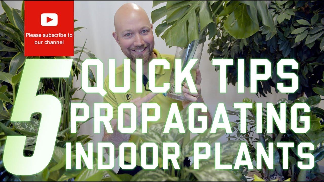 5 Quick tips Propagating indoor plants