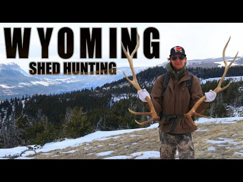 SHED HUNTING for DEER and ELK HORNS | WYOMING 2021