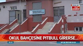 Öğrencilere pitbull saldırdı! - Atv Haber 22 Şubat 2019