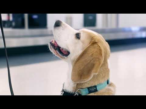 Quarantine WA Detector dogs | Department of Agriculture and Food WA