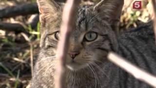 Наука о кошках