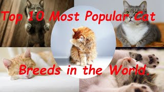 Top 10 Most Popular Cat Breeds in the World.