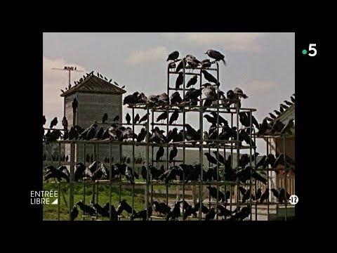 entrée-libre-se-fait-des-films-:-«-les-oiseaux-»