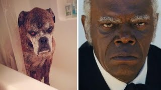 Download Animals That Exactly Look Like Celebrities And Famous People Mp3 and Videos