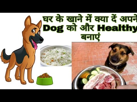 Apne Dog Ko Ghar Ke Khane m Kya De Dog Diet/Best Dog Food / Dog Price list in India /Price list 2019