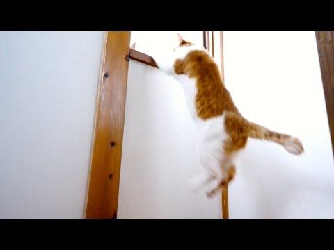 お年寄り猫のジャンプ - Elderly Cat Jump -