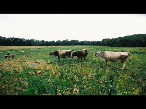 Cows Moved 2X A DAY - 100% Grass Fed (Organic) Dairy