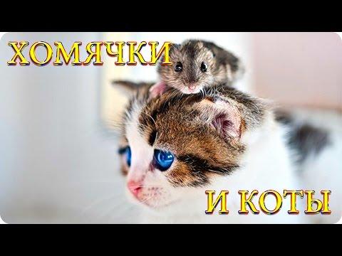 Видео хомяков -