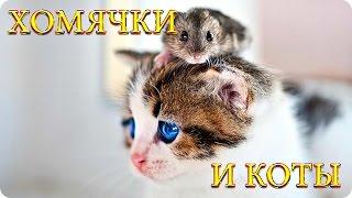 Забавные Хомячки и Коты! Веселая Видео Подборка! Смешные Животные/