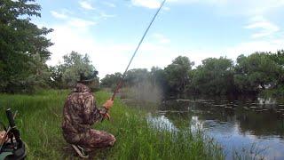 Выехал рано утром на рыбалку и наловил карасей Рыбалка на карася в период мошки