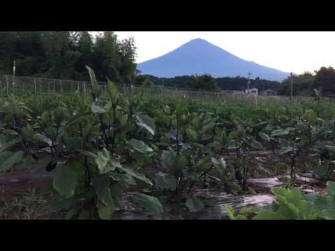 Abatake organic farm view