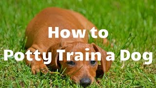 How to Potty Train a Dog - Dog Toilet Training