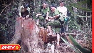 Rừng phòng hộ kêu cứu: Mật phục vây bắt lâm tặc | Hành trình phá án | ANTV