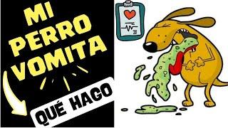 Mi perro vomita - Causas y Soluciones