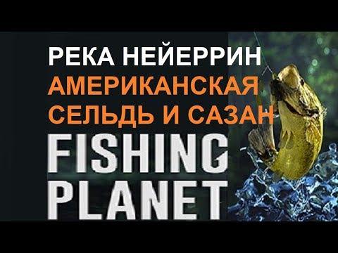 Американская сельдь и сазан на реке Нейеррин Fishing Planet