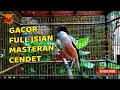 Masteran Burung Cendet Full Isian Gacor Dor Cocok Buat Masteran  Mp3 - Mp4 Download