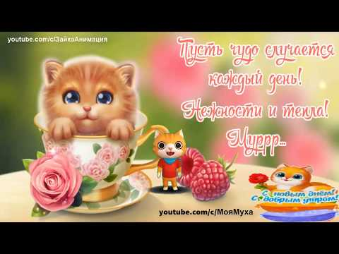 Лучше Кошки Зверя нет Весёлая песенка#кошка - Лучшие видео поздравления в ютубе (в высоком качестве)!