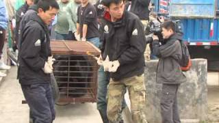 Charity rescues bears from bile farms in southwestern China