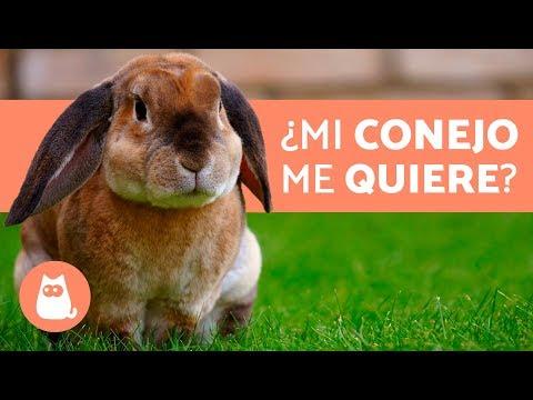 ¿Cómo saber si mi conejo ME QUIERE - 5 señales
