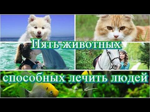 DARK STAlb Пять животных способных лечить людей (Five animals are able to treat people)