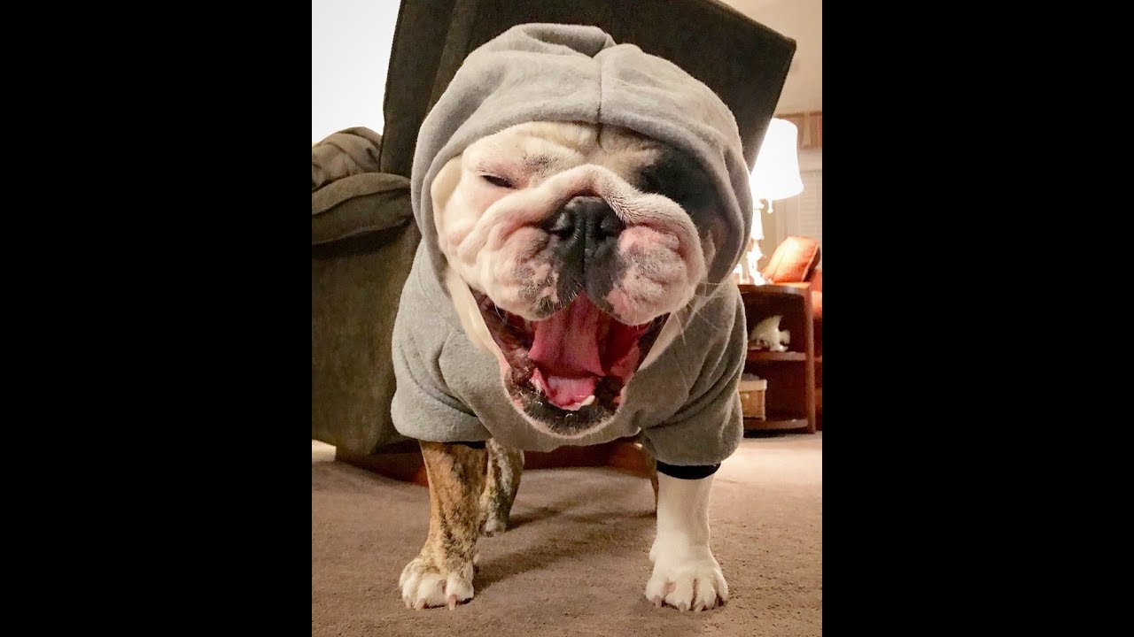 reuben-the-bulldog-winter-is-coming