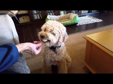 Train a dog to smile/bite
