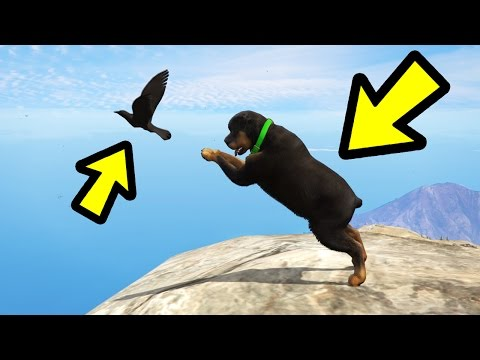 IS CHOP ABLE TO CATCH BIRDS? (GTA 5)