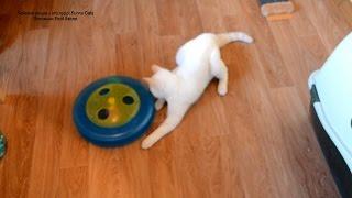 Улётное видео! Котёнок задний ход включает, играя в рулетку! Тайские кошки - это чудо! Funny Cats