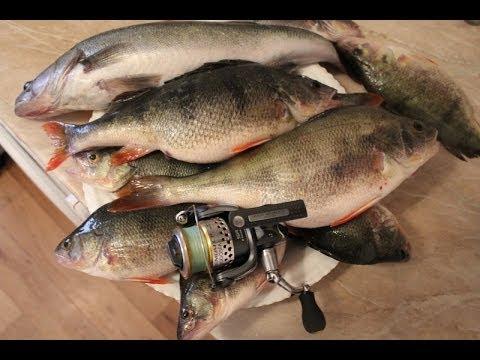 рыбалка в мурманске на окуня