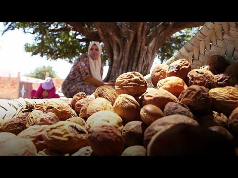 The gold that grows on Morocco's argan trees - target thumbnail