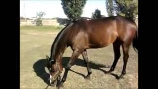 моя жизнь | лошади | хореография
