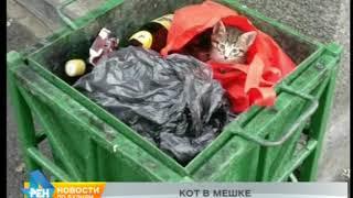 Народный корреспондент: котята в урне