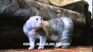 Коты говорят  Забавные кошки  Funny cat compilation