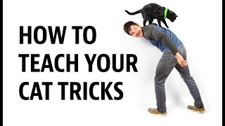 HOW to Teach your Cat Tricks