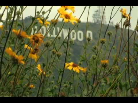 Hollywood Land Tours