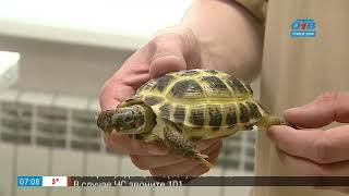 Пушистое утро – профосмотр черепахи