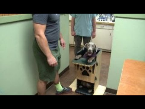 dog high chair 4 dining table designs with rare condition eats meals in youtube