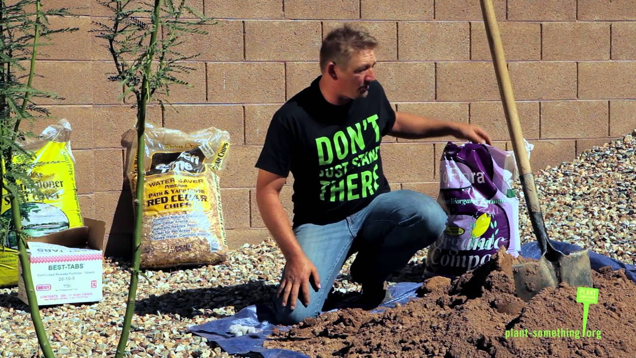 How To Plant A Tree In Arizona 15 Gallon Youtube