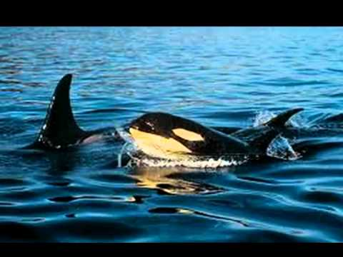 Save Whales, Dolphins, Porpoise / Cetaceans & May They All Swim Free & Protected Forever !