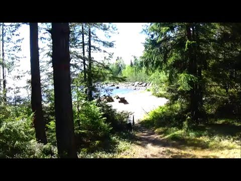 Taking A Walk In Swedish National Reserve