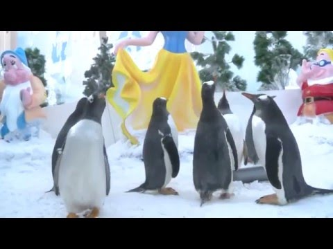 It's so cold in northeastern China's Harbin, even the penguins are shivering.