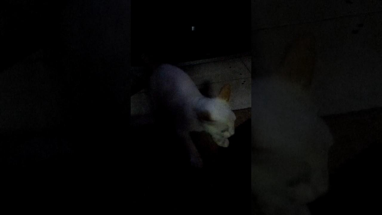Kucing Albino Perum Gajah Youtube