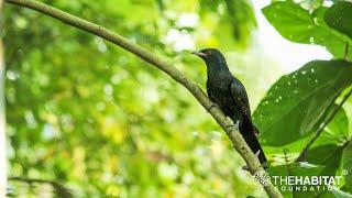 Backyard Birding - Episode 2: Common Birds in Penang