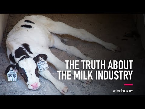 The Truth About the Milk Industry